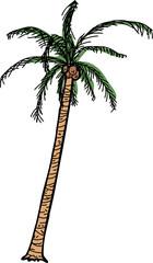 Isolated Cartoon Coconut Palm