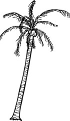 Outlined Coconut Palm