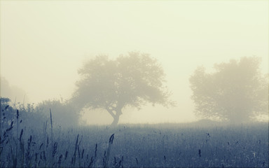 Trees in the foggy field, soft focus