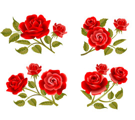 Vector rose buttonholes