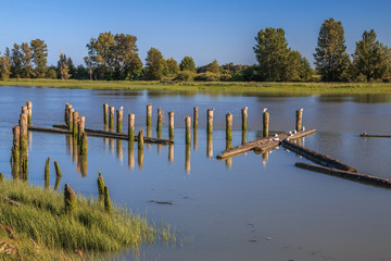 Old pilings in the Fraser River. Richmond BC, Canada.