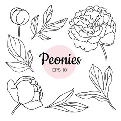 Vector set of monochrome black and white peony flower isolated o
