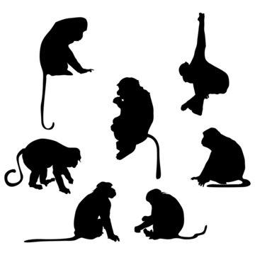 Playful monkey silhouettes