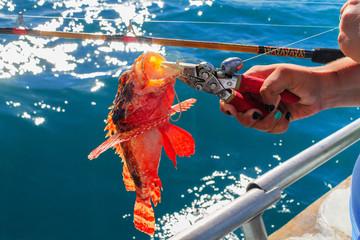 Catch a Fire fish