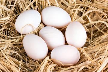 Fresh Duck white organic eggs on straw.