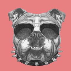 Hand drawn portrait of English Bulldog with collar and sunglasses. Vector isolated elements.