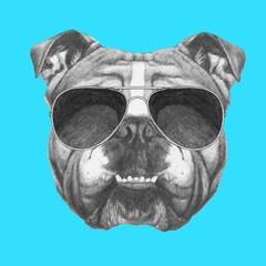 Hand drawn portrait of English Bulldog with sunglasses. Vector isolated elements.