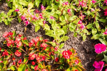 Hintergrund für Pflanzenliebhaber