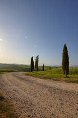 Fototapete - A rural road in Tuscany, Italy