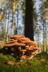 Group brown mushrooms