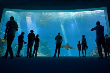 Shark Pool of Coral World Underwater Observatory aquarium in Eil