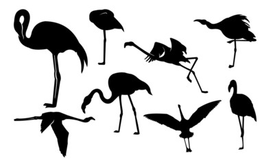 Flamingo Bird Silhouette