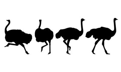 Ostrich Bird Silhouette