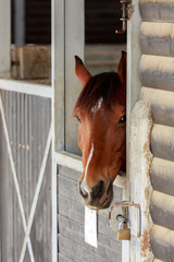 One cute brown horses portrait