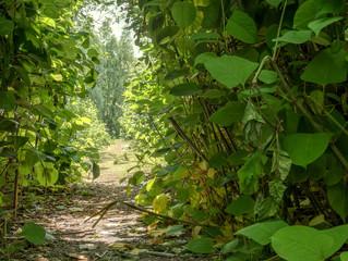 sonnendurchfluteter Blätterwald
