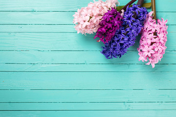 Background with fresh flowers hyacynths