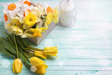 Background with fresh  yellow tulips and narcissus