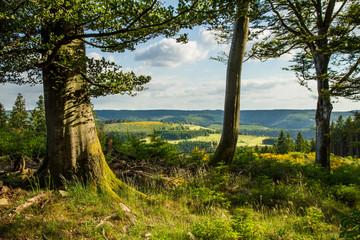 Waldlichtung im Sauerland