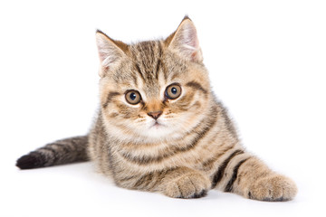 Striped kitten lying down and looking at the camera (isolated on white)
