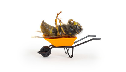 Dead wasp in a miniature wheelbarrow