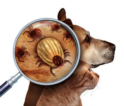 Pet Tick