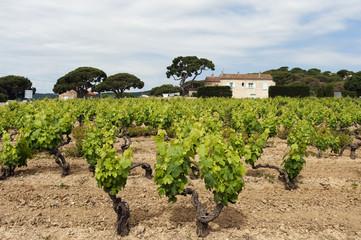 Blick auf Weinberge, Frankreich
