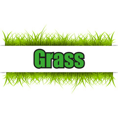 Green grass isolated on white background. Vector illustration