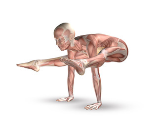 3D female figure with muscle map in yoga position