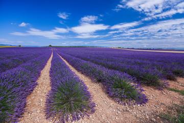 Lavendelvelden in Valensole - Frankrijk
