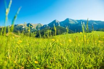 Wall Mural - Mountains Summer Meadow
