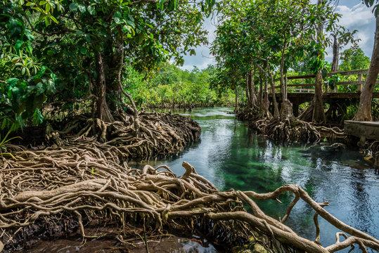 root tree in swamp forest , tha pom krabi,thailand