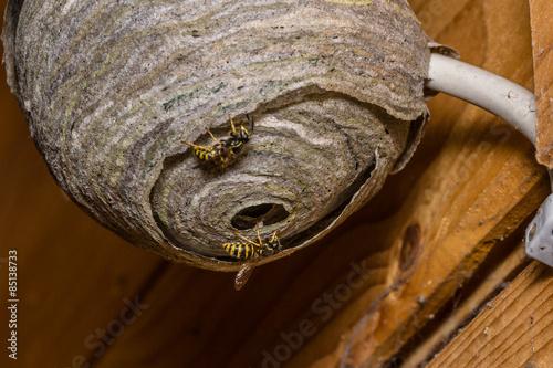 wespennest stockfotos und lizenzfreie bilder auf bild 85138733. Black Bedroom Furniture Sets. Home Design Ideas