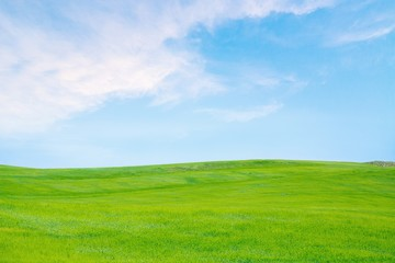 Sky, Grass, Field.