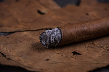 Cuban cigar on tobacco leaves
