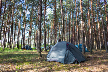 Tent camp in sunny morning lights in green forest