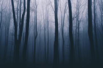 Fototapeten Wald spooky forest night