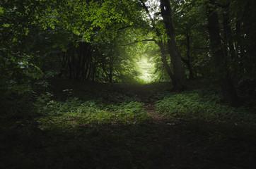 green forest dark path