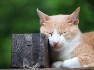 角材を枕にして眠る猫