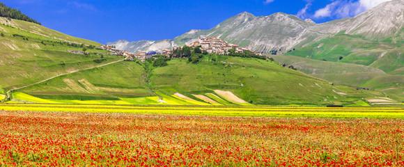 Fototapeta scenic of Italy - Castelluccio di Norcia, blooming meadows. Umbr