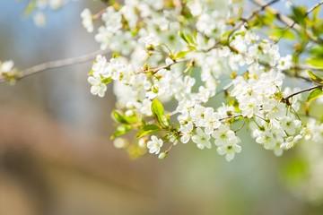 Spring, tree, greeting.