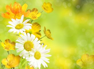 Цветы полевые лютики