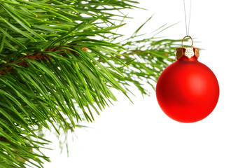 red decoration ball on pine branch