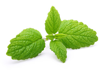 Green mint leaves isolated
