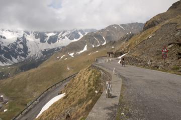 Bicycle italian tour at Gavia Pass
