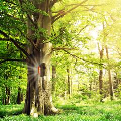 Bestattung im Wald
