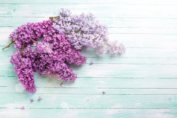 Postcard with  lilac flowers