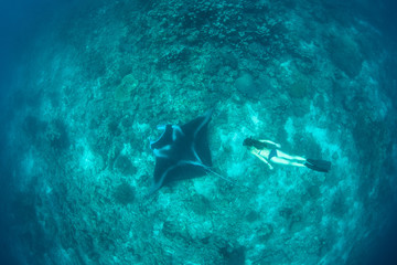 Manta Ray and Free Diver