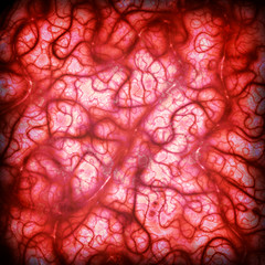 blood arteries and veins