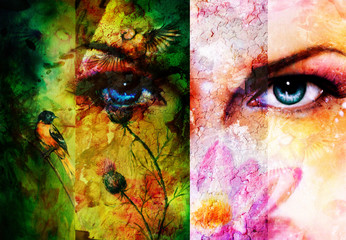 Color abstract background with birds and flower and  blue eye.