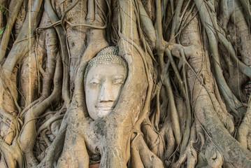 popular Buddha's head in tree